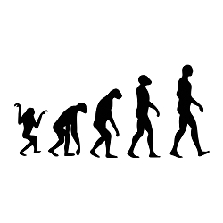 Evolution Line Vinyl Decal