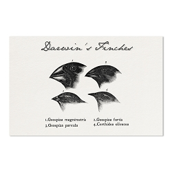Darwin's Finches Drawings Poster - [11'' x 17'']